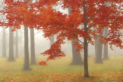 Autumn Mist II by Donna Geissler