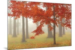 Autumn Mist II by Donna Geissler