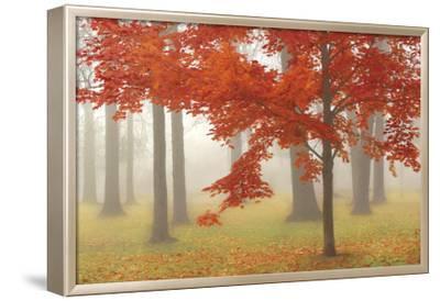 Autumn Mist II