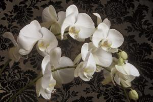 Bountiful Orchids by Donna Geissler