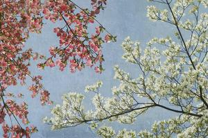 Dogwood by Donna Geissler