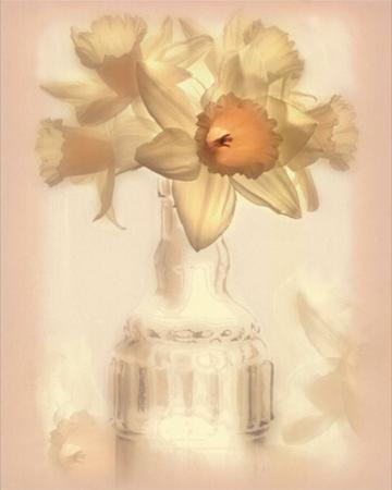 Lovely Daffodil by Donna Geissler