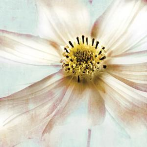 Soft Cosmos by Donna Geissler