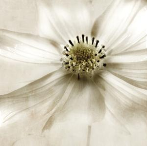 Whisper of Cosmos by Donna Geissler