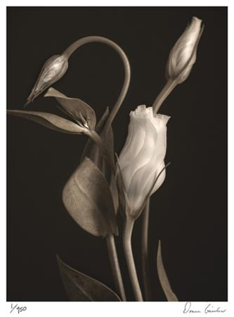 White Lisianthus I