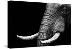 Elephant by Donvanstaden