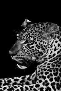 Leopard by Donvanstaden