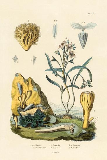 Door Snail, 1833-39--Giclee Print
