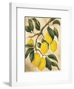 Italian Harvest, Lemons by Doris Allison