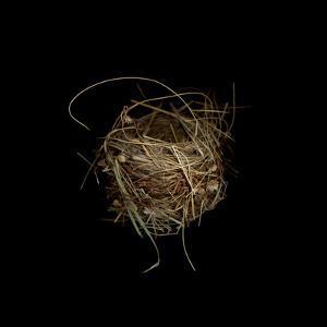 Construction 7: Birds Nest by Doris Mitsch