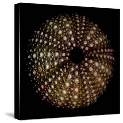 Deep 1: Brown Sea Urchin