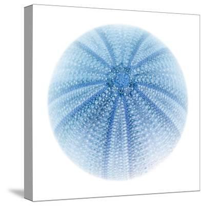 Light 1: Sea Urchin