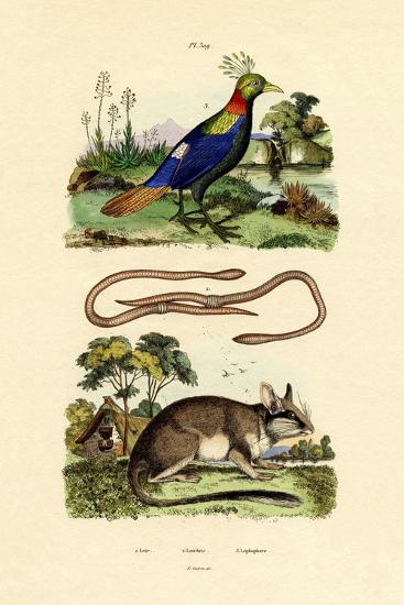Dormouse, 1833-39--Giclee Print