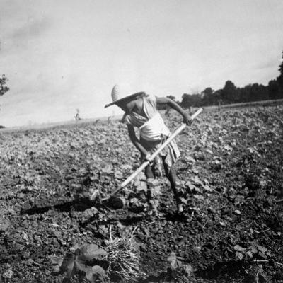 Child of Black Tenant Farmer Family Using Hoe While Working in Cotton Field by Dorothea Lange