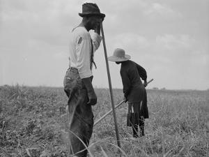Cotton sharecroppers Georgia, 1937 by Dorothea Lange