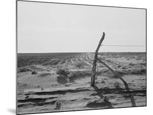 Furrowing against the wind to check the drift of sand Texas, 1938 by Dorothea Lange