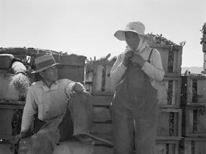 Japanese agricultural workers in California, 1937 by Dorothea Lange