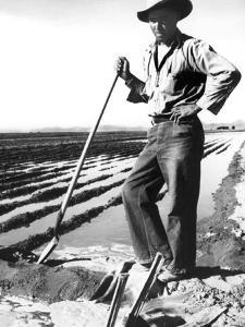 Migrant Irrigator by Dorothea Lange