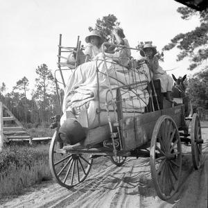 Moving day in the turpentine pine forest of North Florida, 1936 by Dorothea Lange