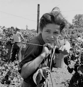 Portrait of a Migratory Boy Picking Hops by Dorothea Lange