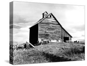 The Barn of an Older Settler by Dorothea Lange