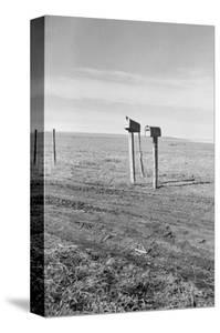 The Rolling Lands by Dorothea Lange