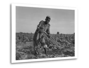 Thirteen-Year Old African American Sharecropper Boy Plowing in July 1937 by Dorothea Lange