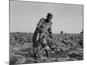Thirteen-year old sharecropper boy near Americus, Georgia, 1937 by Dorothea Lange