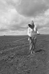 Wife of Texas Tenant Farmer. by Dorothea Lange