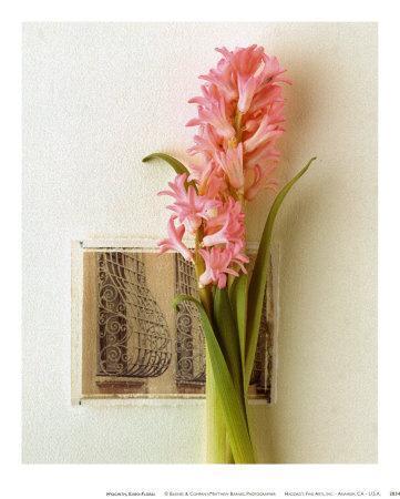 Hyacinth, Euro-Floral