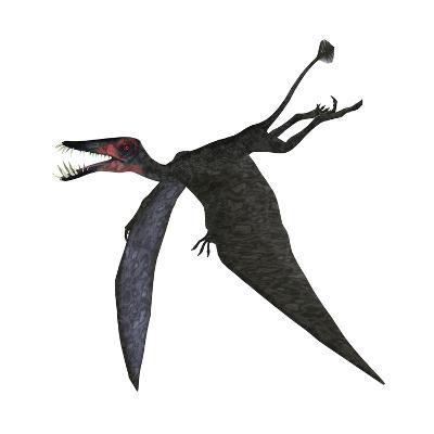 Dorygnathus, a Genus of Pterosaur from the Jurassic Period--Art Print