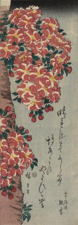 https://imgc.artprintimages.com/img/print/double-cherry-in-flower_u-l-f2vtvf0.jpg?artPerspective=n