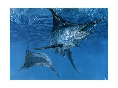 Double Header: Makaira Nigricans, Blue Marlin Inspect Baits While One Devours a Ballyhoo-Stanley Meltzoff-Giclee Print