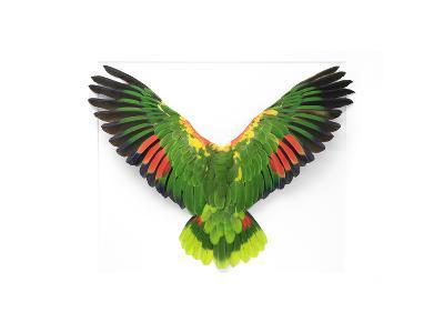 Double Yellow Headed Amazon-Christopher Marley-Photographic Print