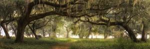 Southern Charm by Doug Cavanah