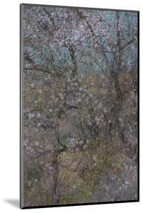 Almond Grove I by Doug Chinnery