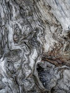 Ancient Bark by Doug Chinnery