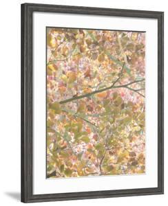 Autumn Cascade by Doug Chinnery