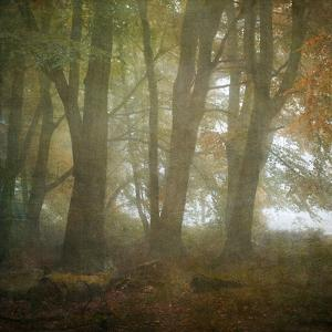 Autumn Dawn by Doug Chinnery