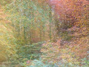 Autumn Dreams II by Doug Chinnery