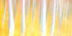 Autumn Dreams by Doug Chinnery