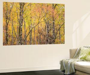 Autumn Majesty by Doug Chinnery