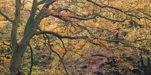 Autums Caress by Doug Chinnery