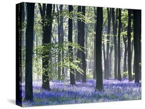 Bluebell Vision by Doug Chinnery