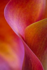 Calla Lily Curves I by Doug Chinnery