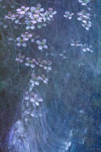 Clematis Cascade by Doug Chinnery