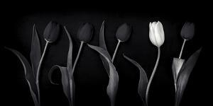 Dare to Be Different by Doug Chinnery