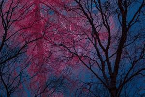 Deepest Doubts by Doug Chinnery