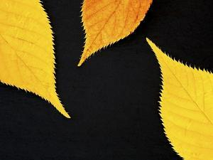 Famously Yellow by Doug Chinnery