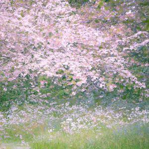 Floral Froth I by Doug Chinnery